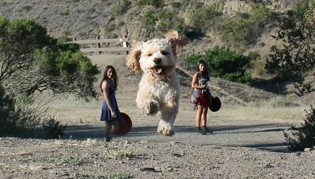 https://www.reddit.com/r/pics/comments/39haeu/the_perspective_makes_this_dog_look_like_a_big/